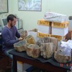 Cenpáleo recebe acervo de peças fósseis de uma das maiores especialistas em paleobotânica do Brasil